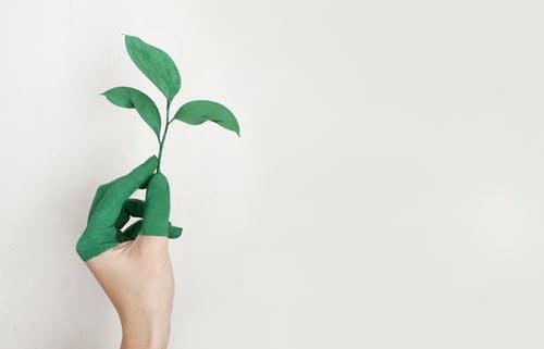 The Right Way to Be an Environmentally Conscious Citizen