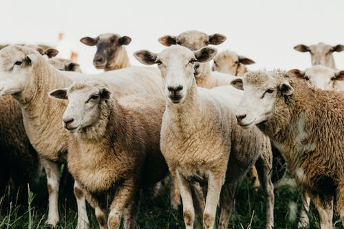 Tips for a Successful Shearing Day